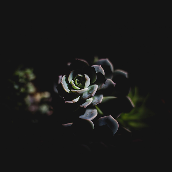 iPapers.co-Apple-iPhone-iPad-Macbook-iMac-wallpaper-nu94-flower-dark-green-nature-wallpaper