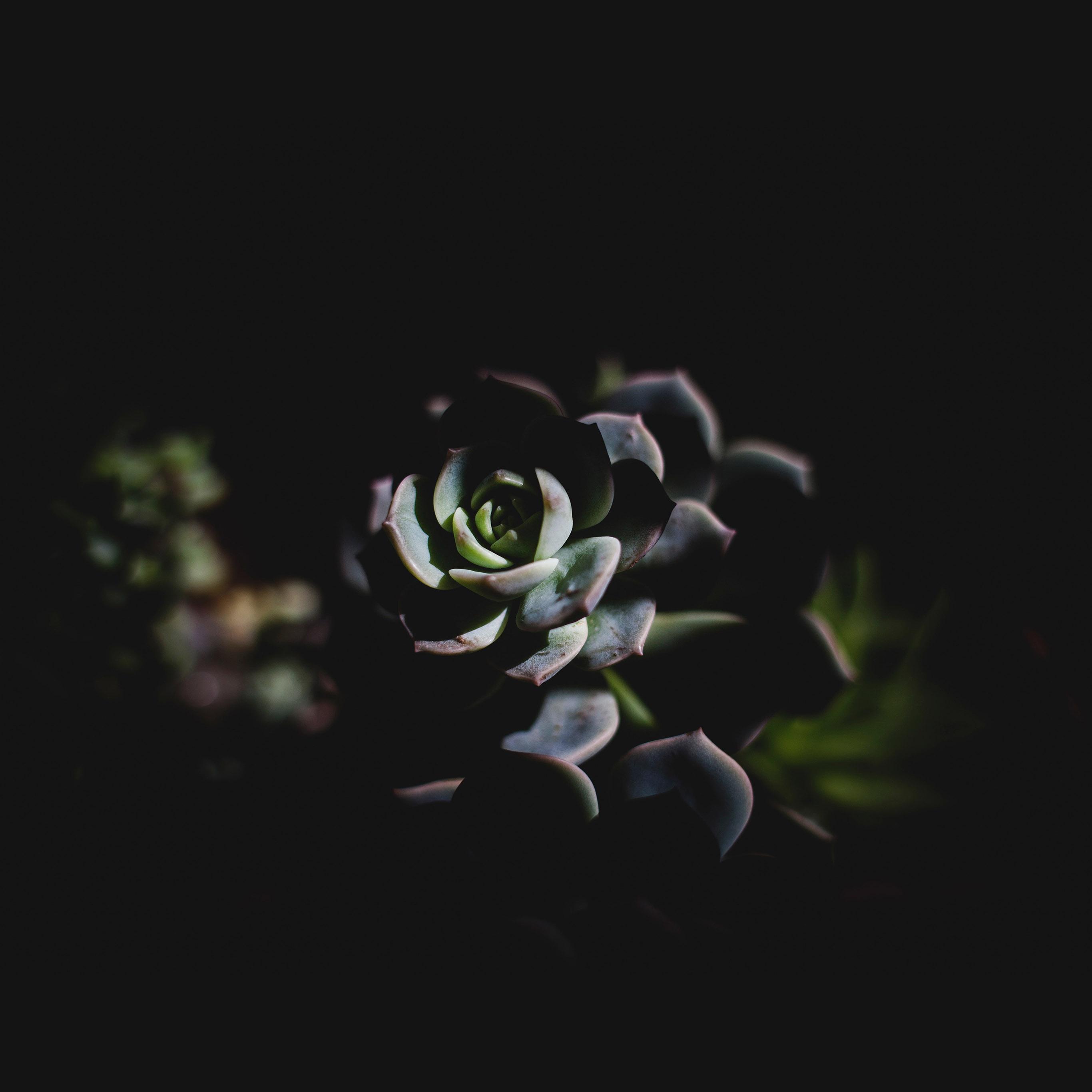 Nu94 Flower Dark Green Nature Wallpaper