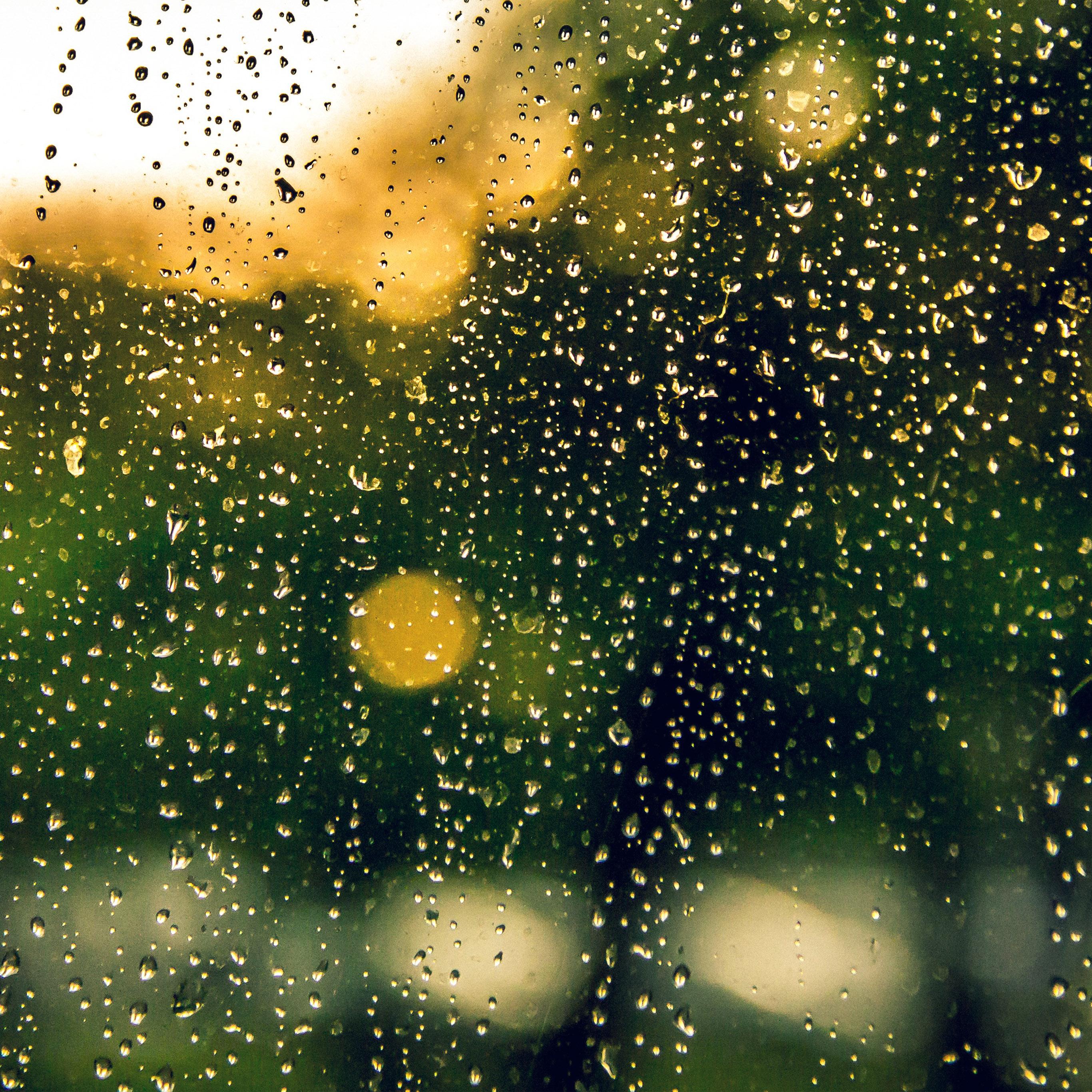 nv02 rain window green nature wallpaper