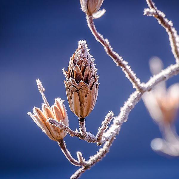 iPapers.co-Apple-iPhone-iPad-Macbook-iMac-wallpaper-nv30-branch-winter-cold-snow-bokeh-nature-wallpaper