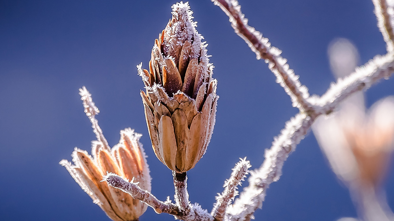 desktop-wallpaper-laptop-mac-macbook-air-nv30-branch-winter-cold-snow-bokeh-nature-wallpaper