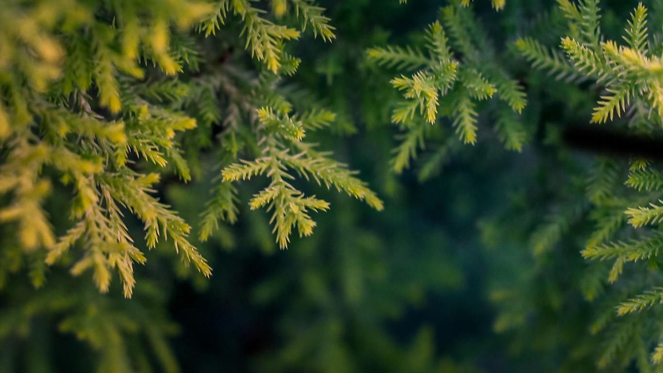 desktop-wallpaper-laptop-mac-macbook-air-nv71-tree-leaf-bokeh-green-nature-wallpaper