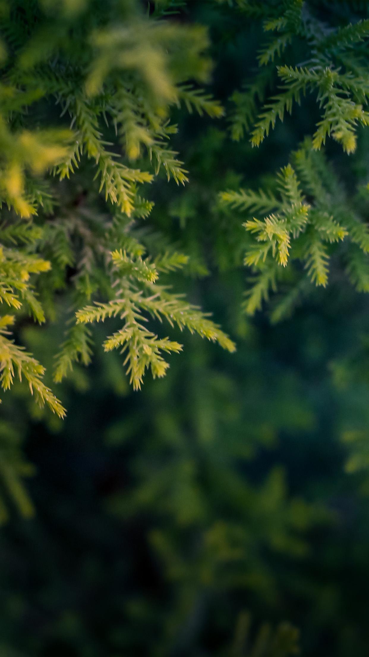 Nv71 Tree Leaf Bokeh Green Nature Wallpaper