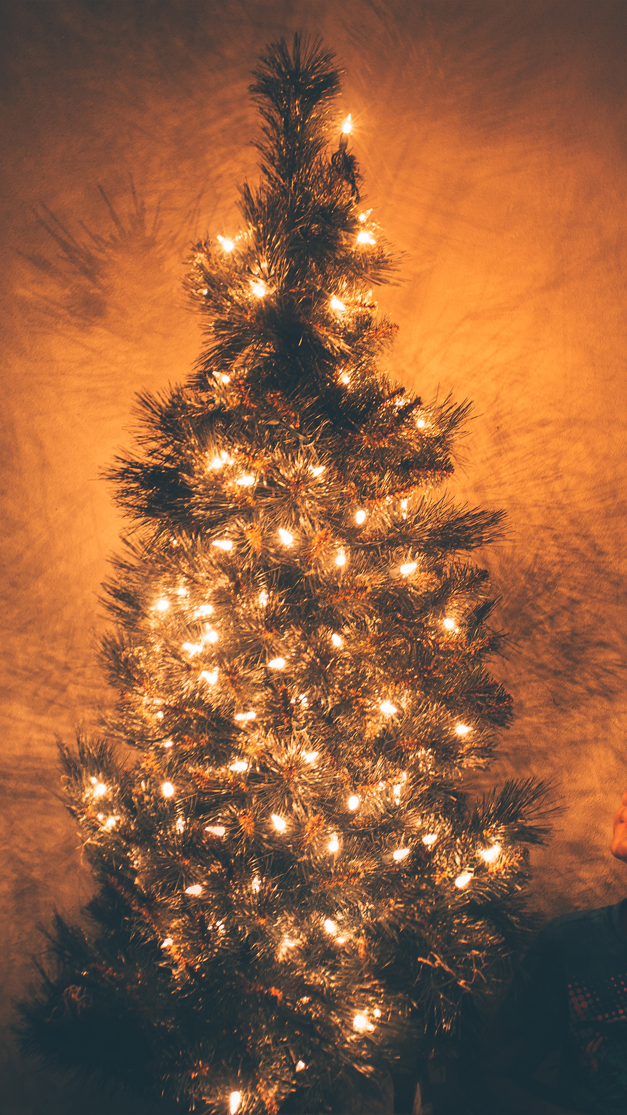 Nv79-christmas-tree-light-holiday-tree-nature-wallpaper