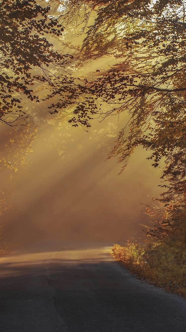 Papers.co-iPhone5-iphone6-plus-wallpaper-nw06-morning-wide-sunlight-fall-tree-mountain-nature