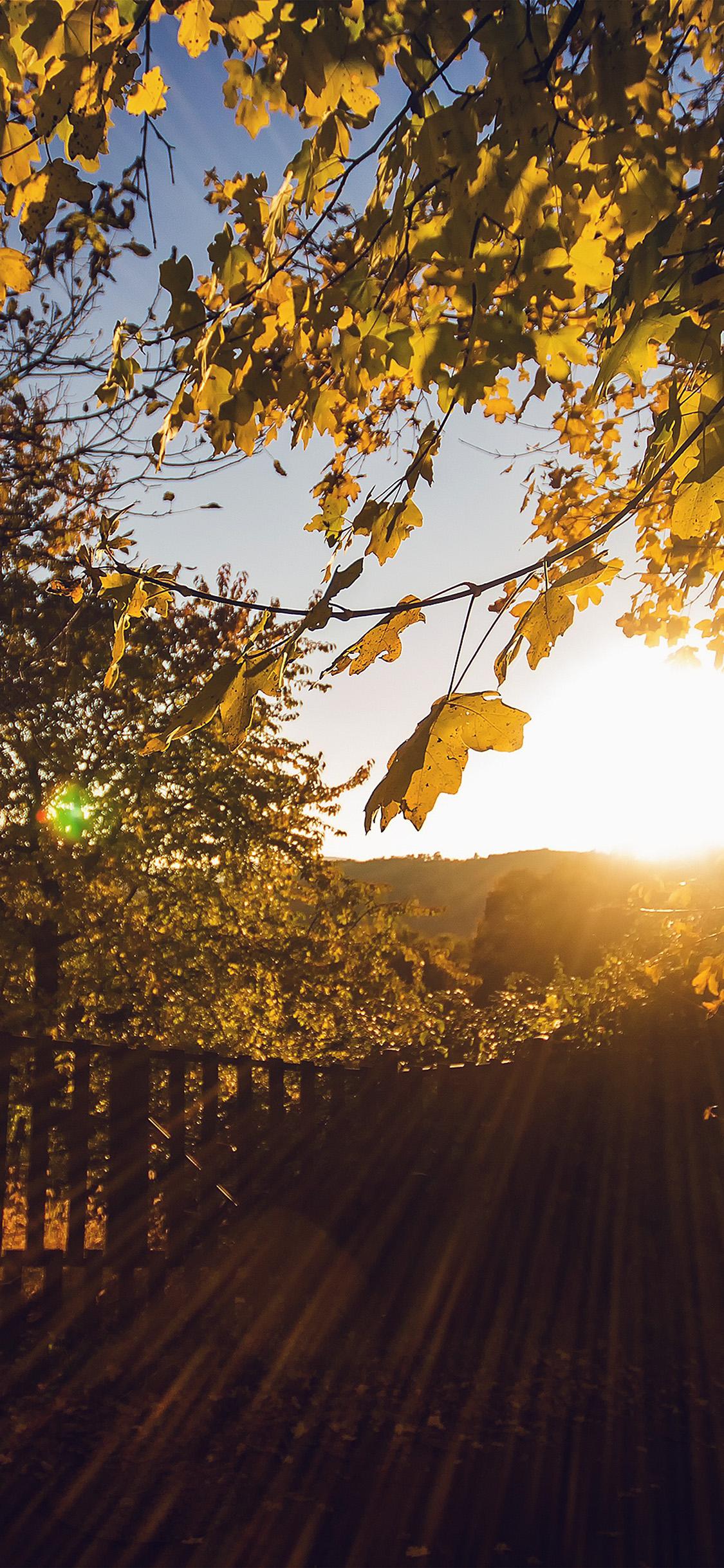 Nw22 Morning Sunlight Fall Nature Wallpaper