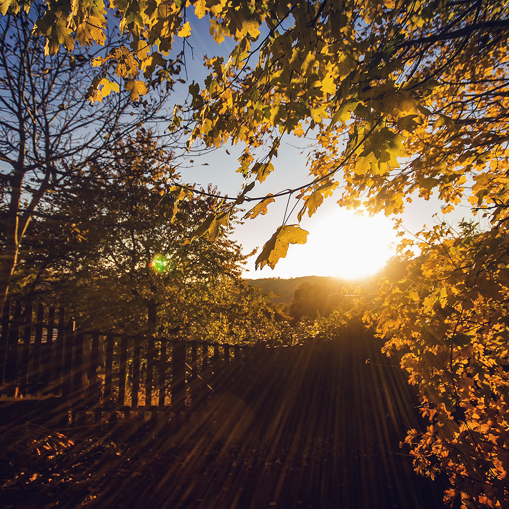 wallpaper-nw22-morning-sunlight-fall-nature-wallpaper
