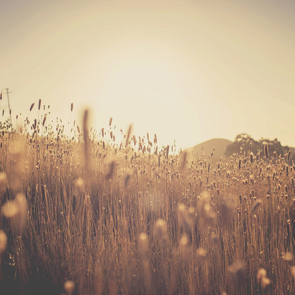 wallpaper-nw28-fall-lawn-bokeh-light-nature-wallpaper