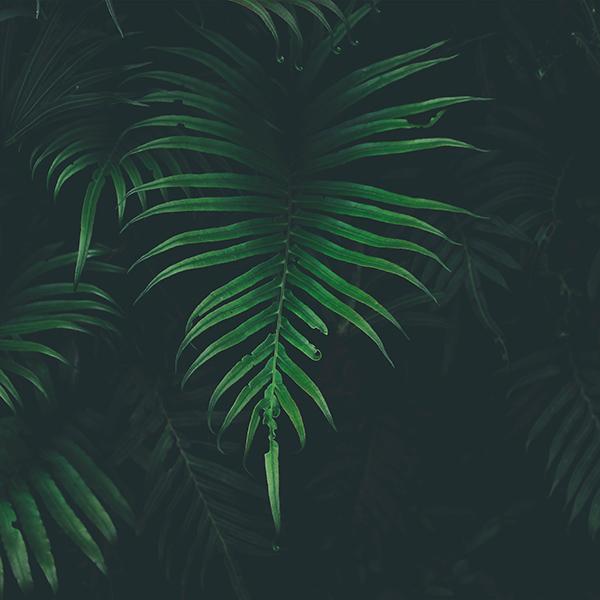 iPapers.co-Apple-iPhone-iPad-Macbook-iMac-wallpaper-nw44-leaf-tree-dark-nature-wallpaper