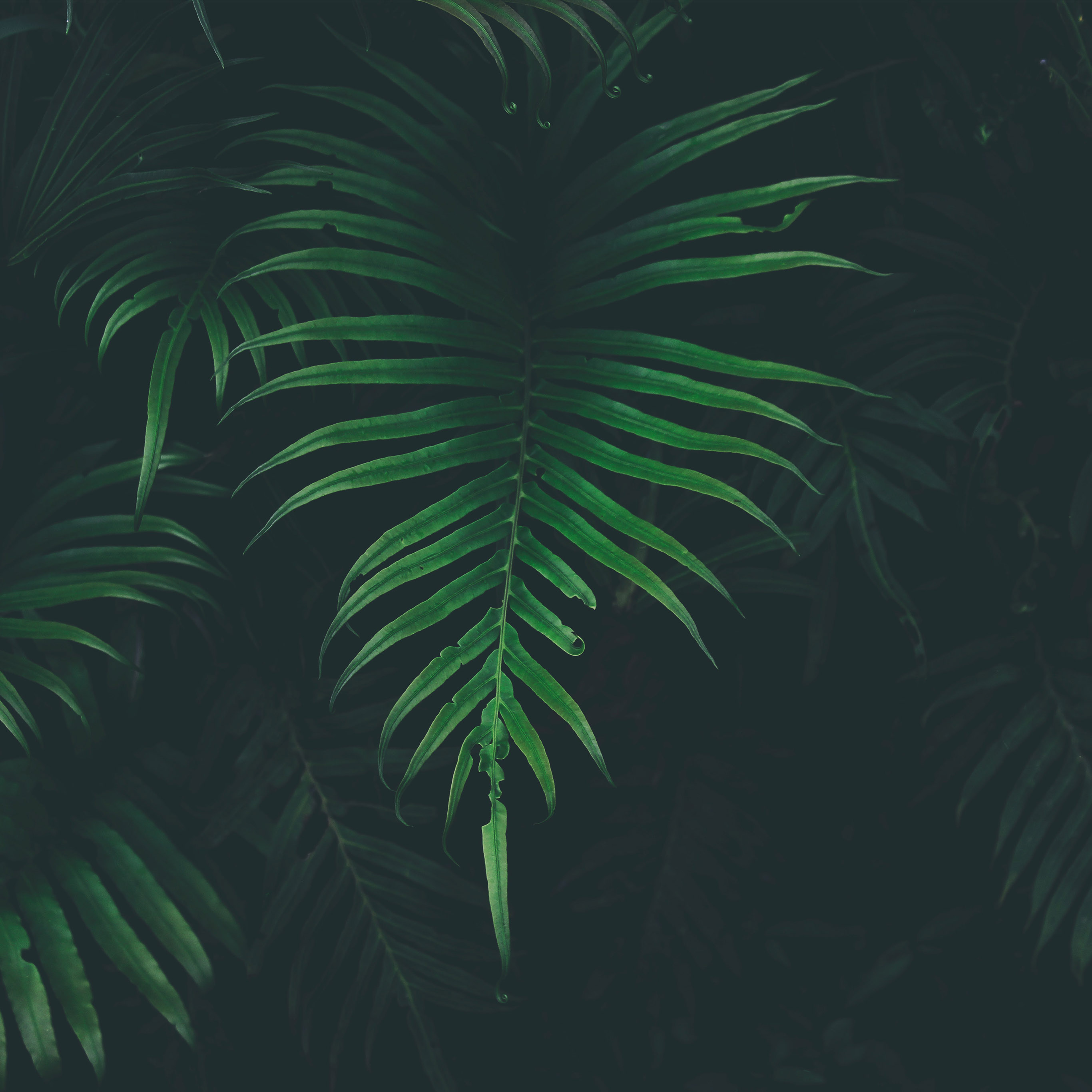 Nw44 Leaf Tree Dark Nature Wallpaper