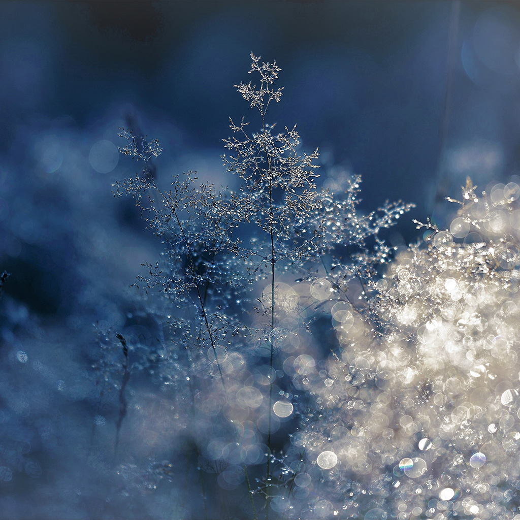 wallpaper-nw53-snow-bokeh-light-beautiful-nature-blue-wallpaper