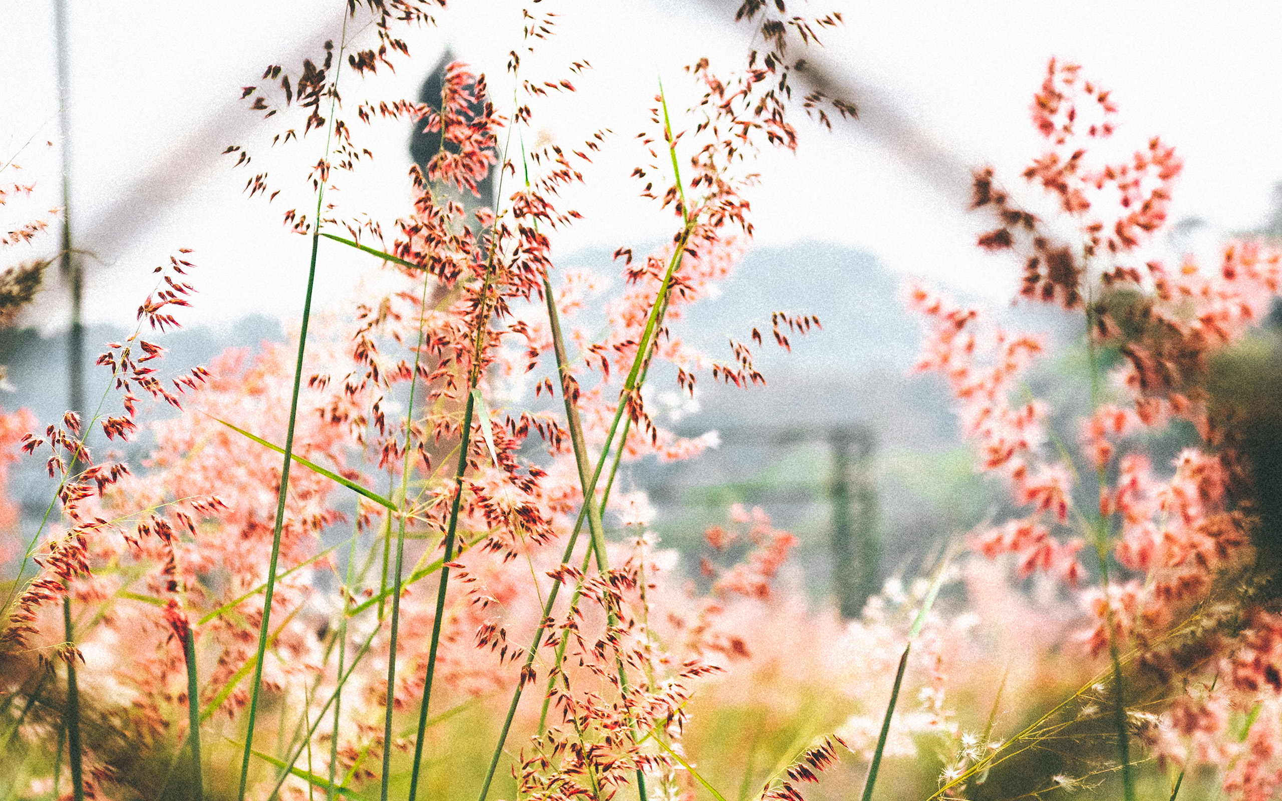 nw59-day-flower-nature-bokeh-wallpaper