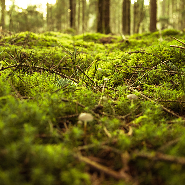 iPapers.co-Apple-iPhone-iPad-Macbook-iMac-wallpaper-nx82-forest-green-bokeh-mountain-nature-wallpaper