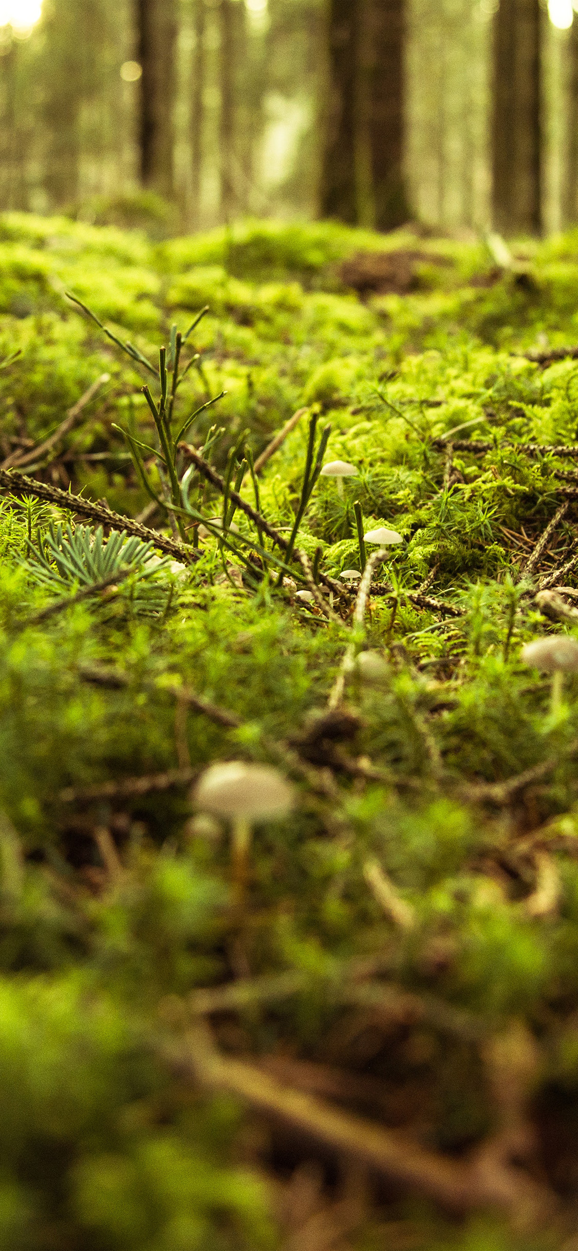 iPhonexpapers.com-Apple-iPhone-wallpaper-nx82-forest-green-bokeh-mountain-nature