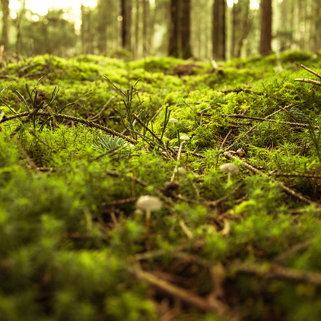android-wallpaper-nx82-forest-green-bokeh-mountain-nature-wallpaper