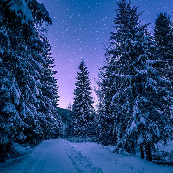 iPapers.co-Apple-iPhone-iPad-Macbook-iMac-wallpaper-nx97-snow-winter-wood-tree-road-night-nature-wallpaper