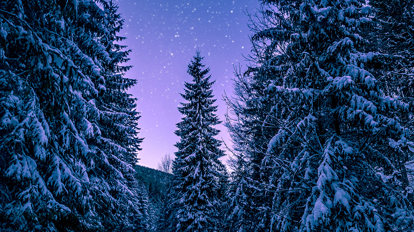 Nx97 Snow Winter Wood Tree Road Night Nature Wallpaper