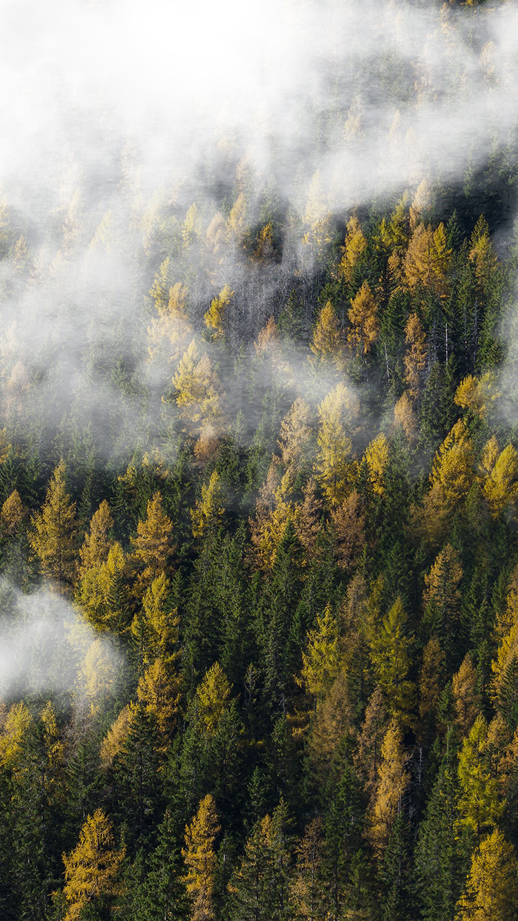 iPhone7papers.com-Apple-iPhone7-iphone7plus-wallpaper-ny33-forest-wood-cloud-foggy-mountain-nature
