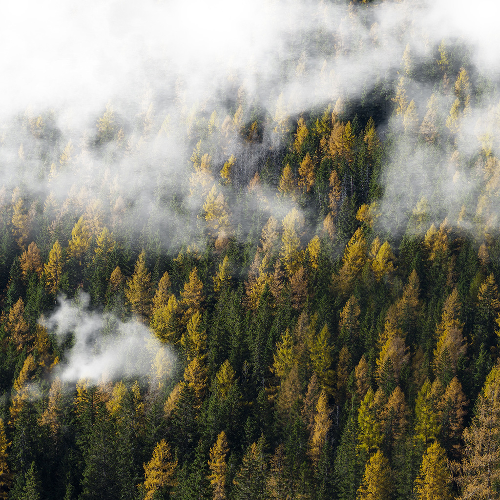 wallpaper-ny33-forest-wood-cloud-foggy-mountain-nature-wallpaper