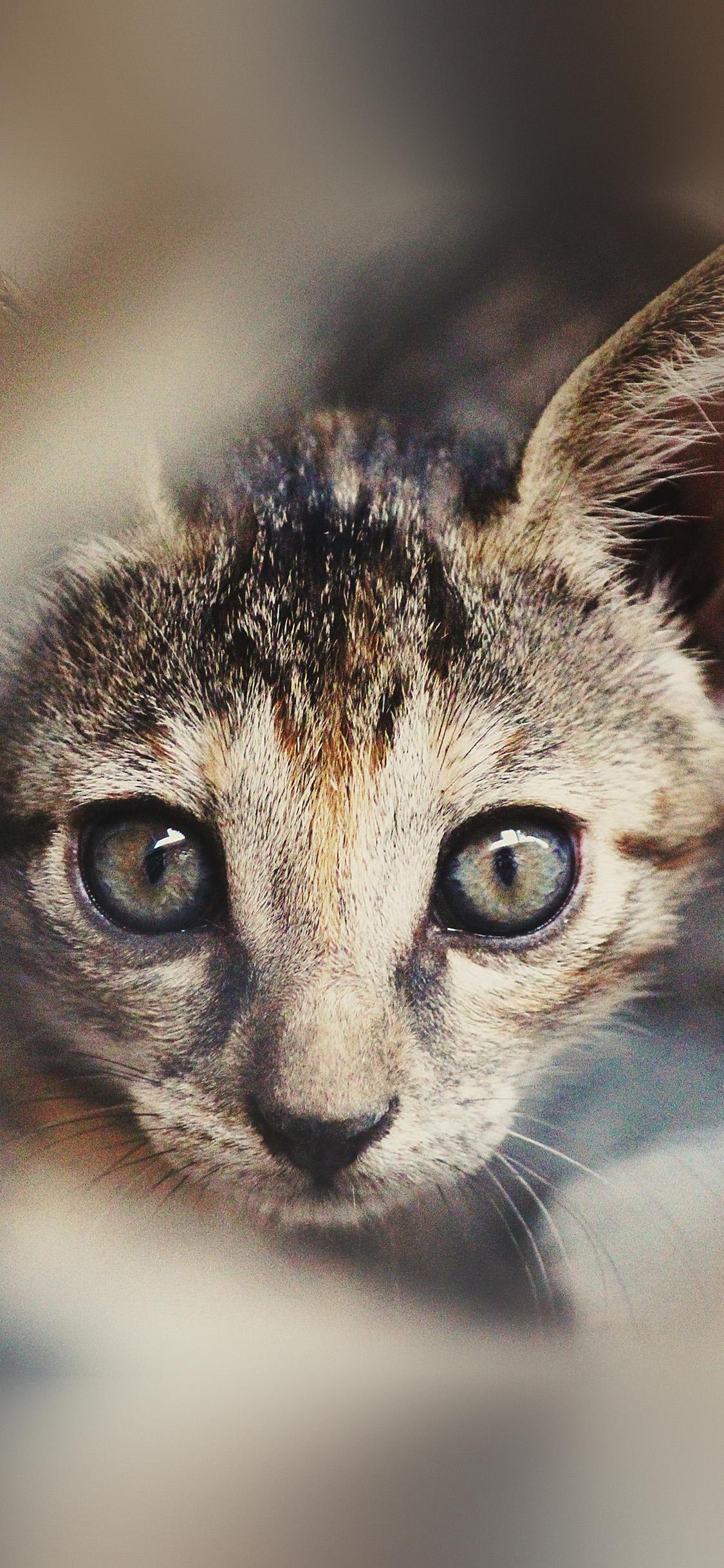 iPhonexpapers.com-Apple-iPhone-wallpaper-ny37-cat-face-cute-animal-nature