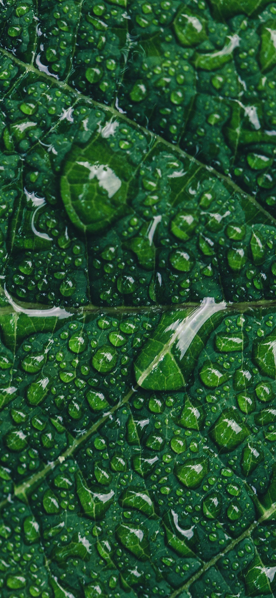 iPhonexpapers.com-Apple-iPhone-wallpaper-ny89-green-leaf-rain-nature-tree