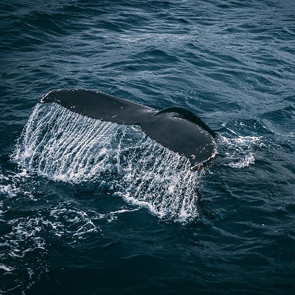 iPapers.co-Apple-iPhone-iPad-Macbook-iMac-wallpaper-nz03-whale-ocean-sea-animal-nature-wallpaper