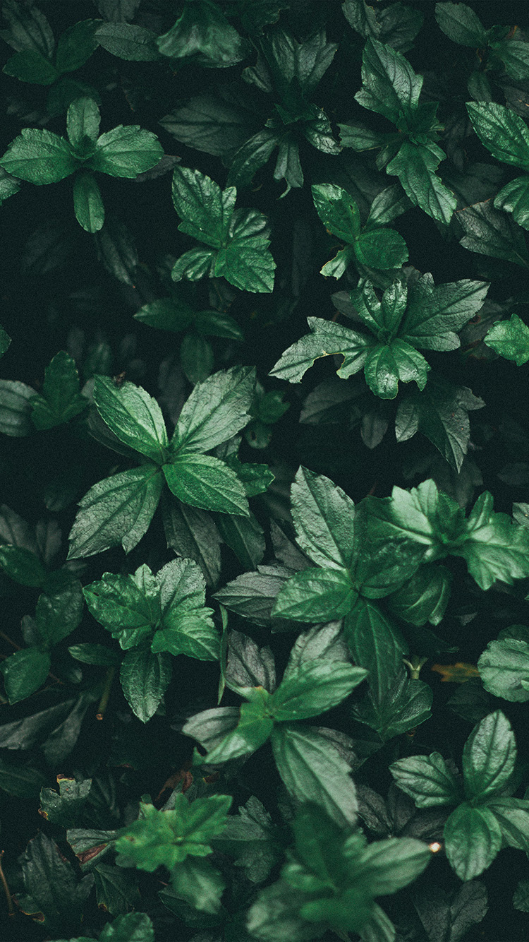 iPhonepapers.com-Apple-iPhone-wallpaper-nz14-leaf-summer-dark-tree-nature