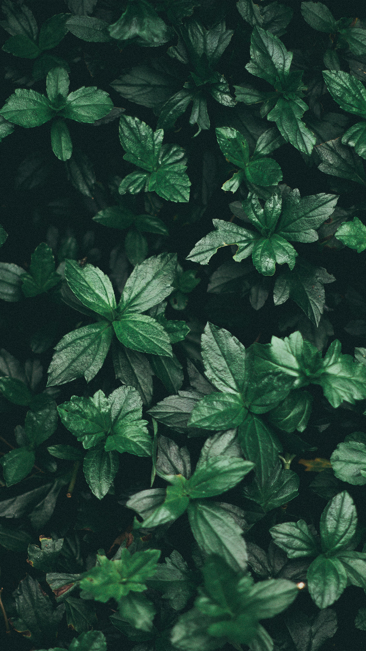 Iphone7papers Com Iphone7 Wallpaper Nz14 Leaf Summer Dark Tree