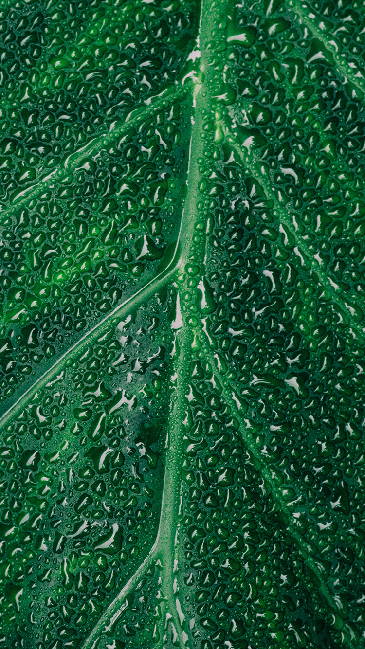 Papers.co-iPhone5-iphone6-plus-wallpaper-nz30-leaf-rain-green-nature