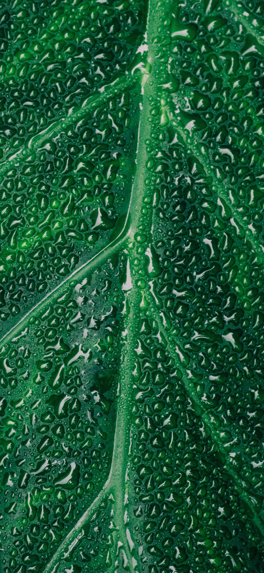 iPhonexpapers.com-Apple-iPhone-wallpaper-nz30-leaf-rain-green-nature