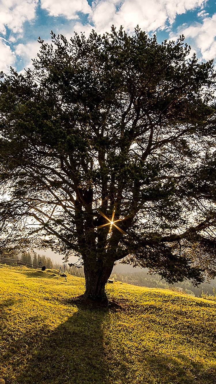 iPhonepapers.com-Apple-iPhone-wallpaper-nz48-tree-sunshine-summer-nature
