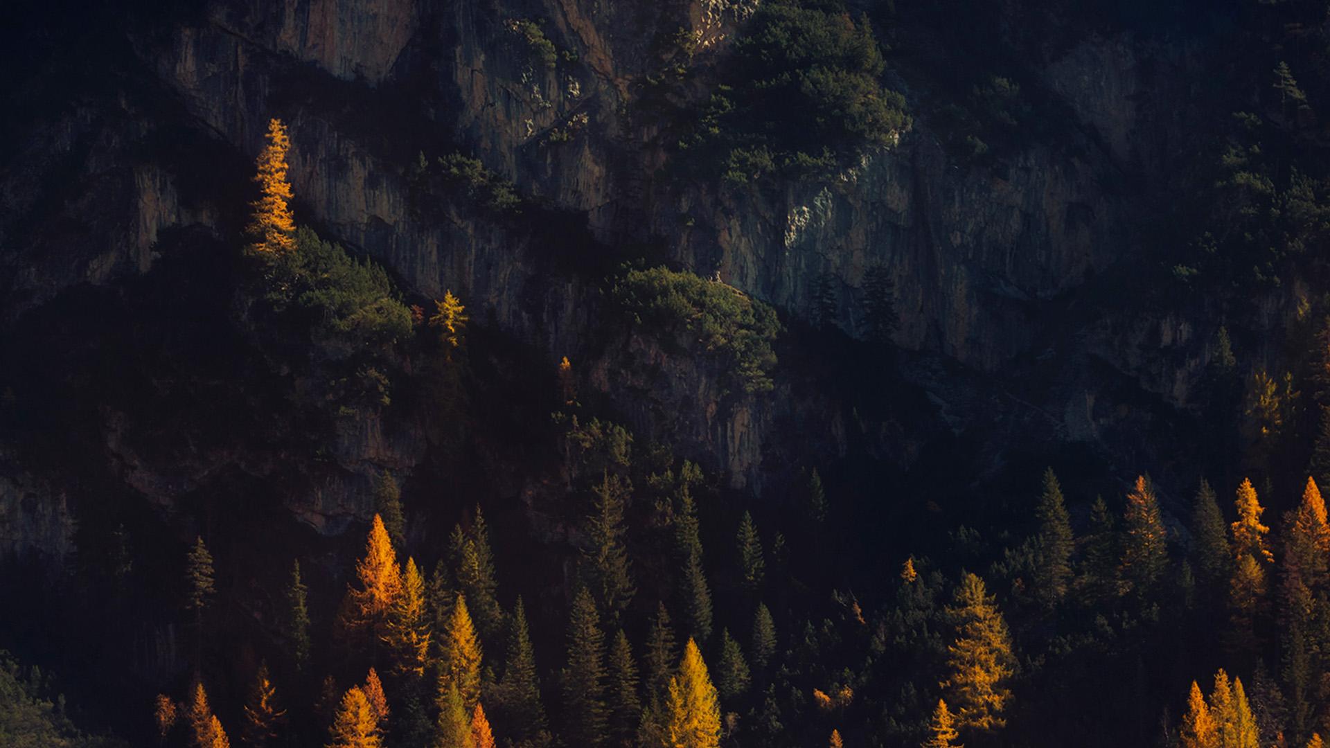 nz49-wood-tree-fall-mountain-nature-wallpaper