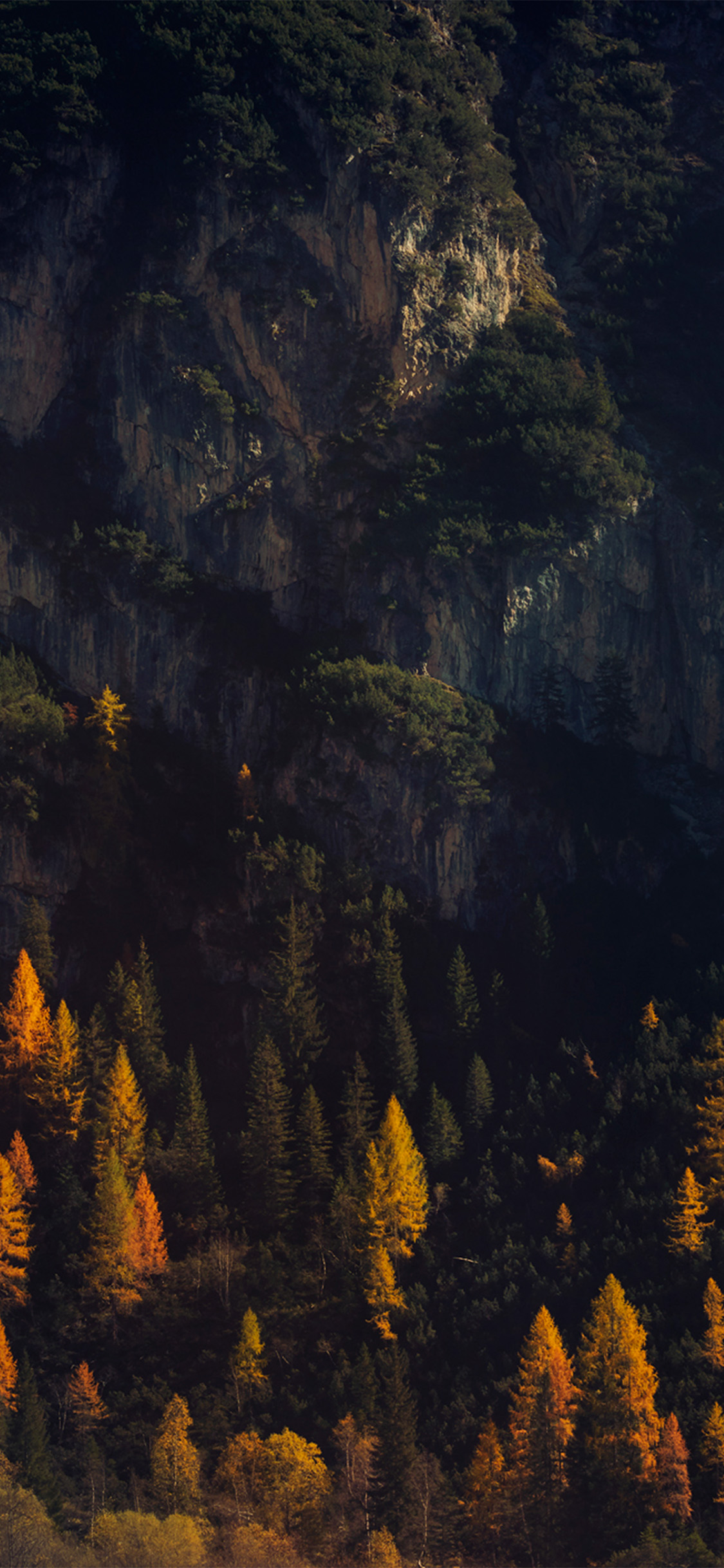 Iphonexpapers Com Iphone X Wallpaper Nz49 Wood Tree Fall Mountain Nature