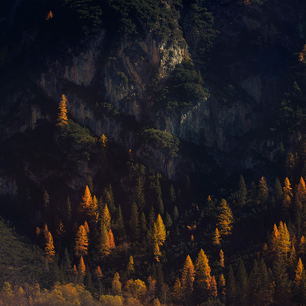android-wallpaper-nz49-wood-tree-fall-mountain-nature-wallpaper