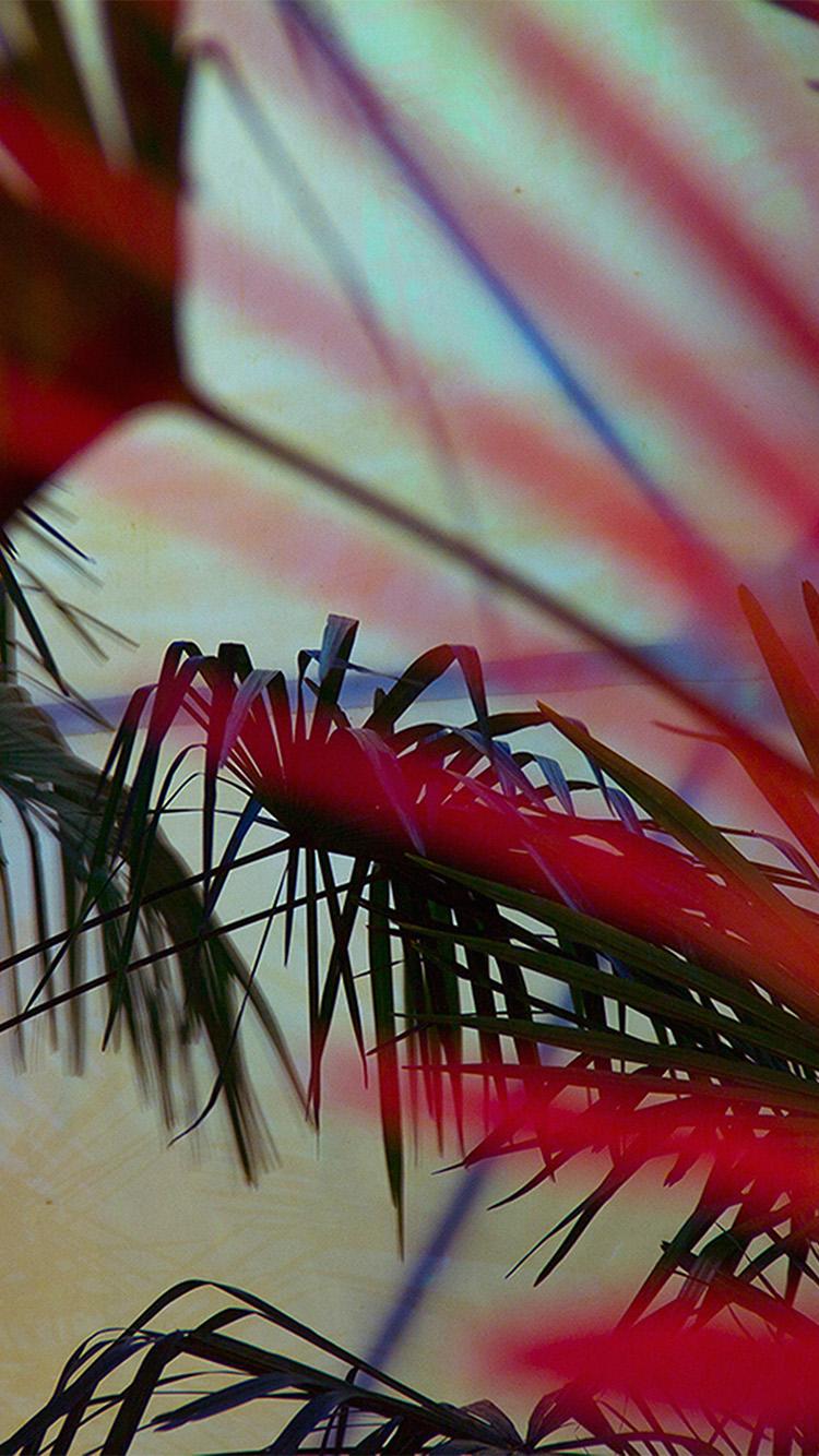 iPhonepapers.com-Apple-iPhone-wallpaper-nz76-flower-red-shadow-nature