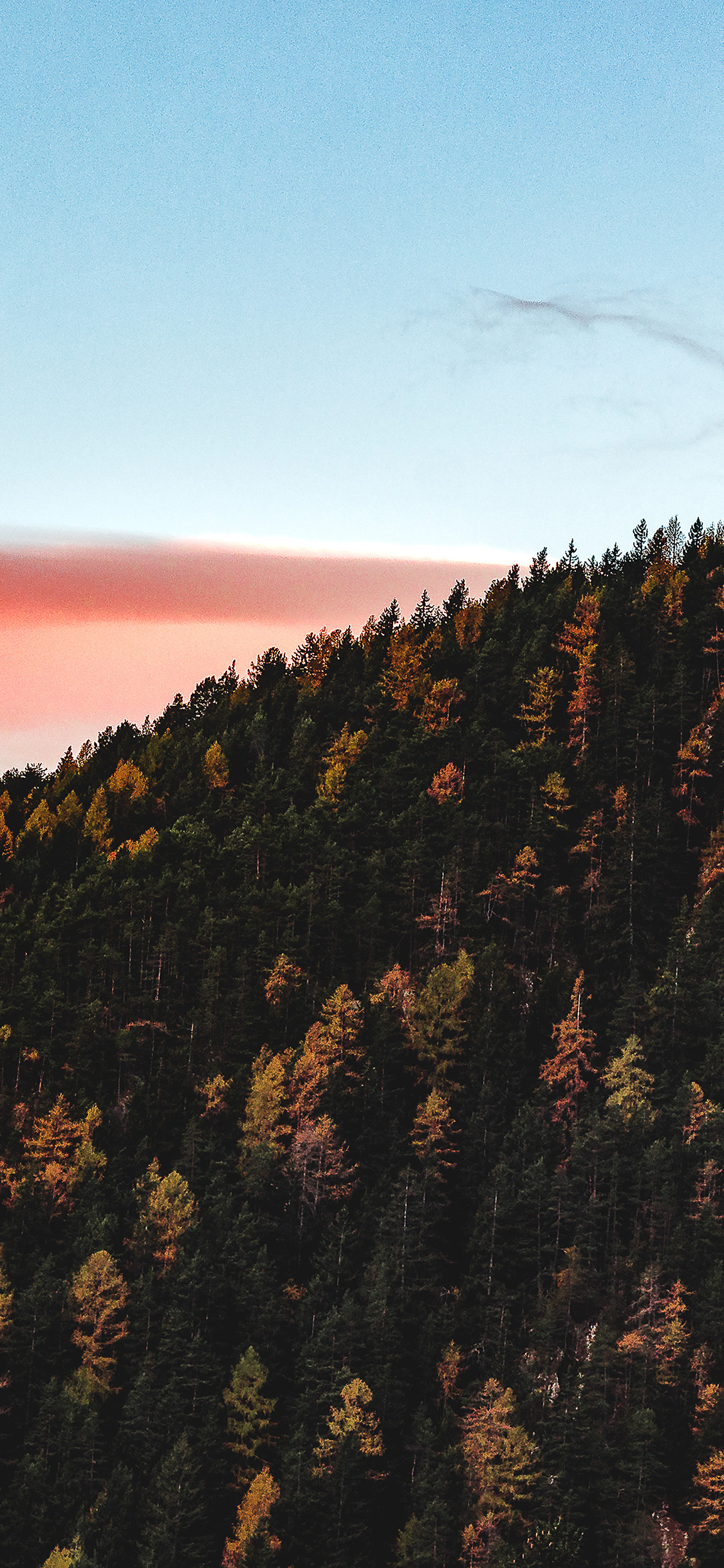 foto de nz92-fall-mountain-wood-autumn-nature-wallpaper