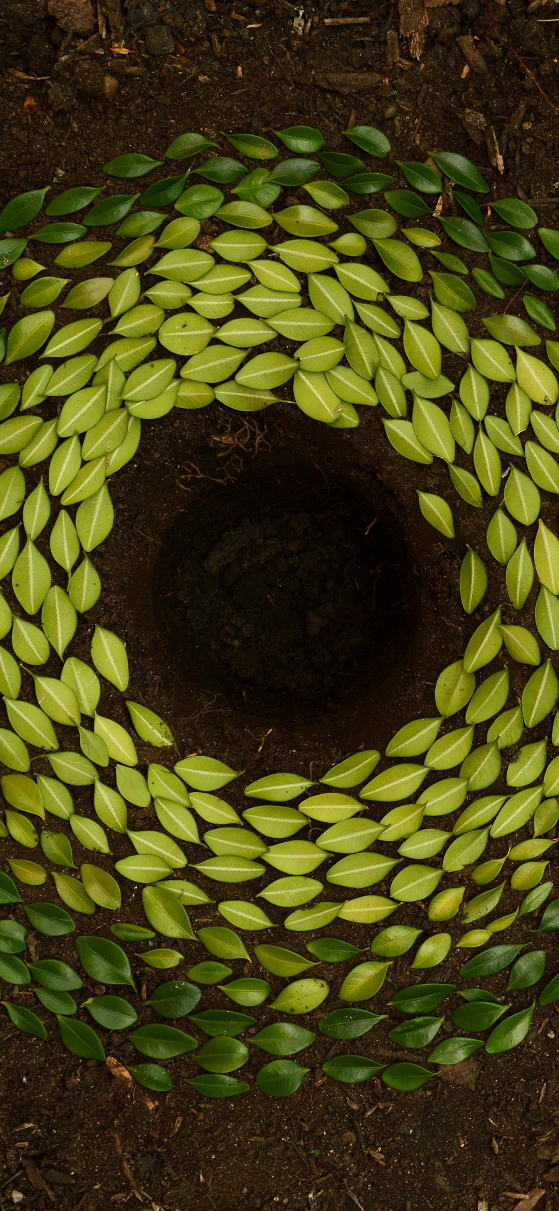 iPhonexpapers.com-Apple-iPhone-wallpaper-nz96-leaf-art-land-green-nature-flower