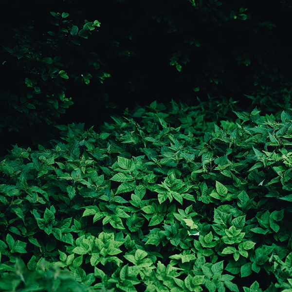 iPapers.co-Apple-iPhone-iPad-Macbook-iMac-wallpaper-oa03-leaf-wood-mountain-flower-green-nature-wallpaper