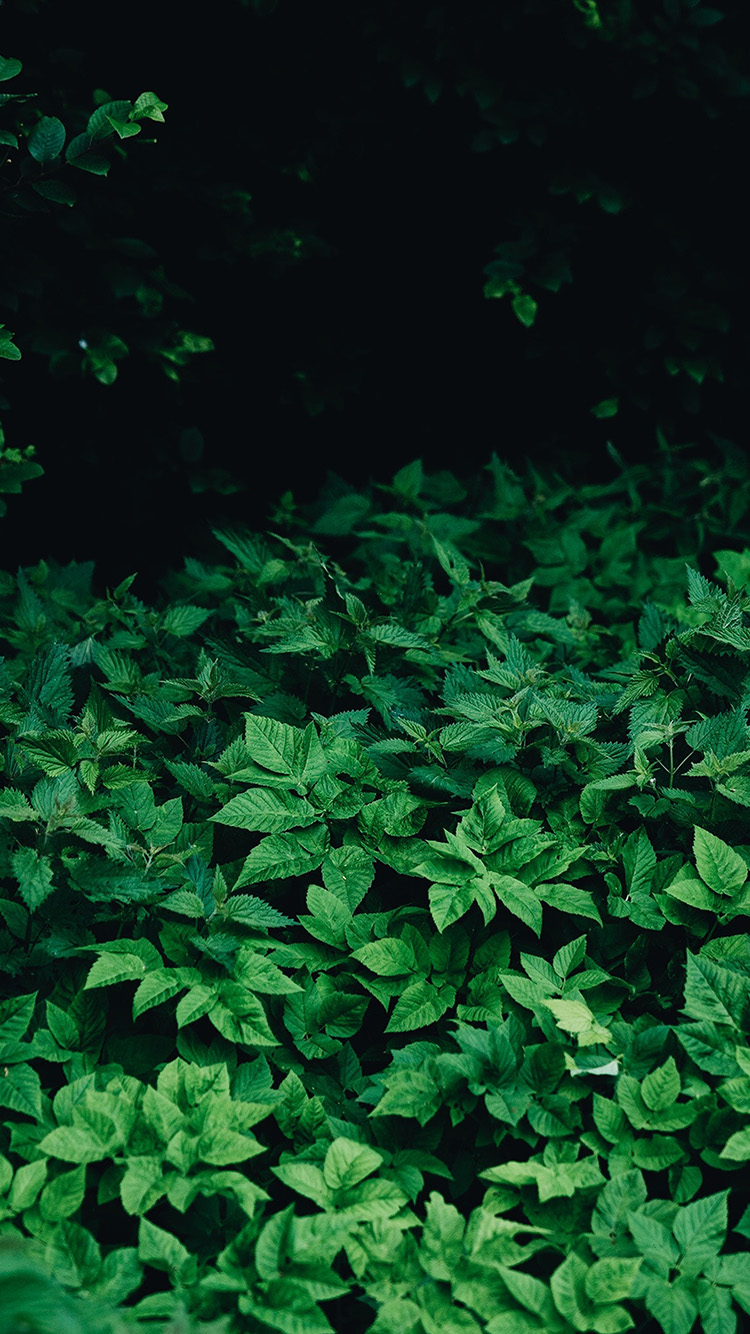 iPhonepapers.com-Apple-iPhone-wallpaper-oa03-leaf-wood-mountain-flower-green-nature