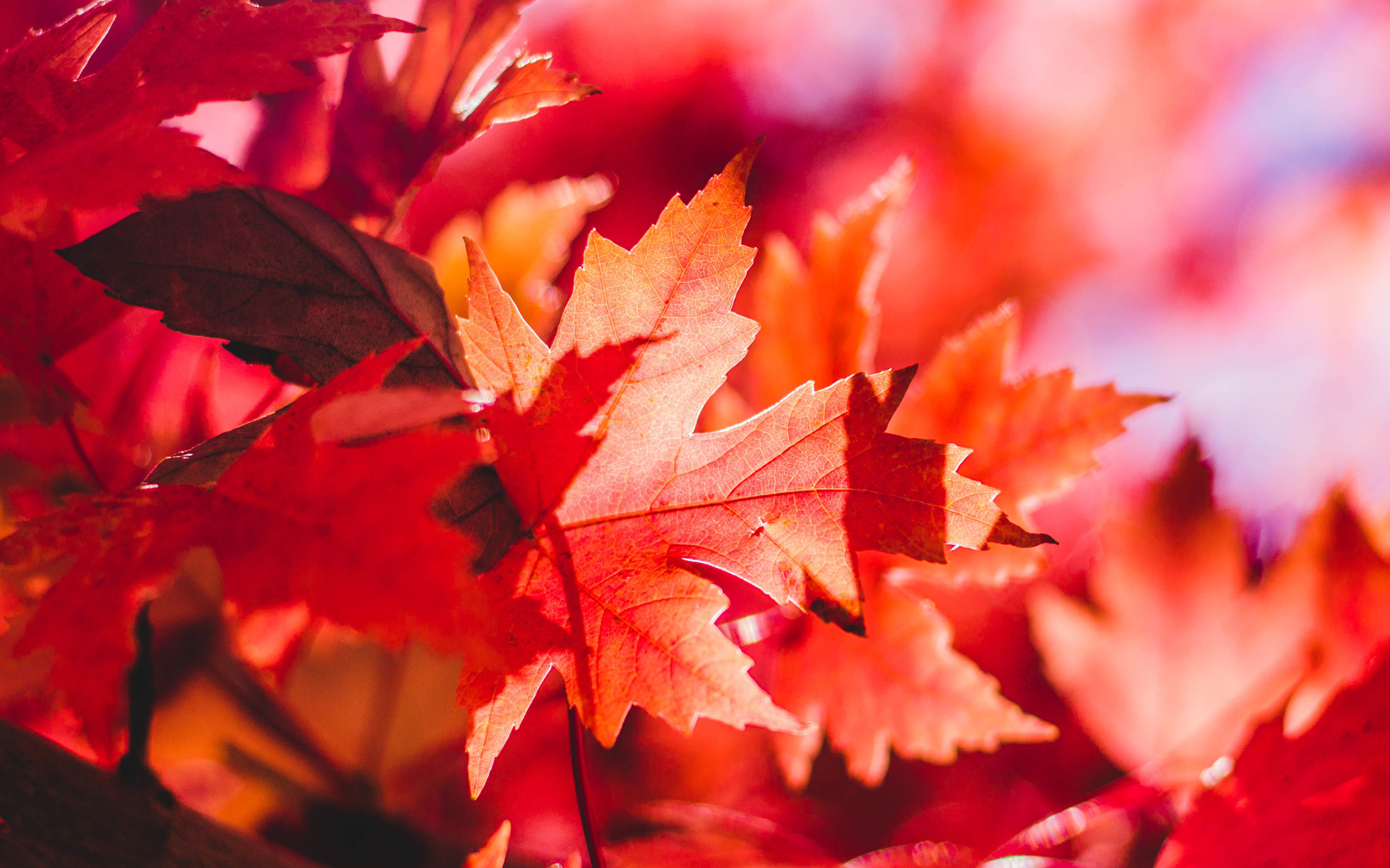 autumn autumn leaves branches colourful leaves nature red sky