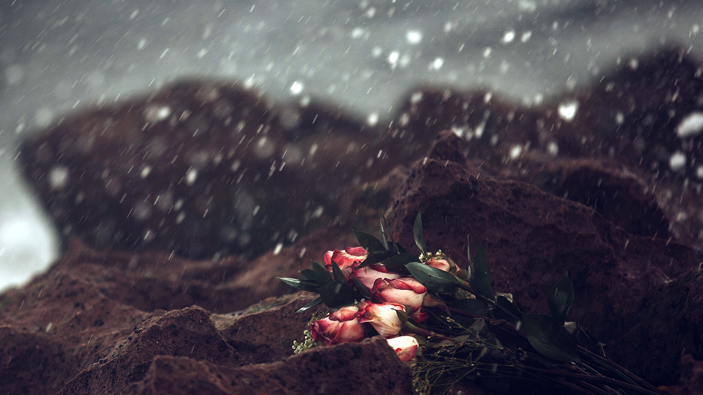 desktop-wallpaper-laptop-mac-macbook-air-oa37-sad-flower-cold-love-nature-rose-wallpaper