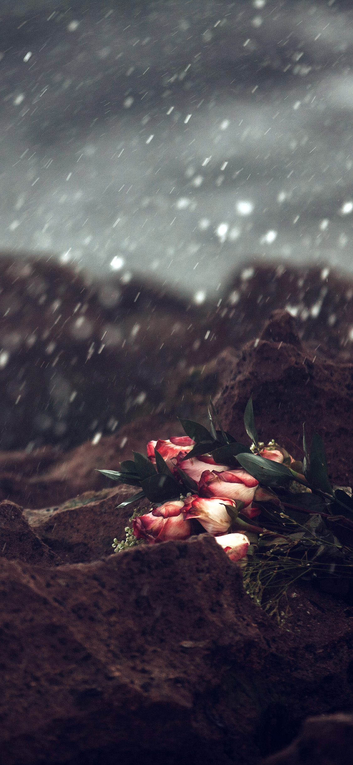 iPhonexpapers.com-Apple-iPhone-wallpaper-oa37-sad-flower-cold-love-nature-rose