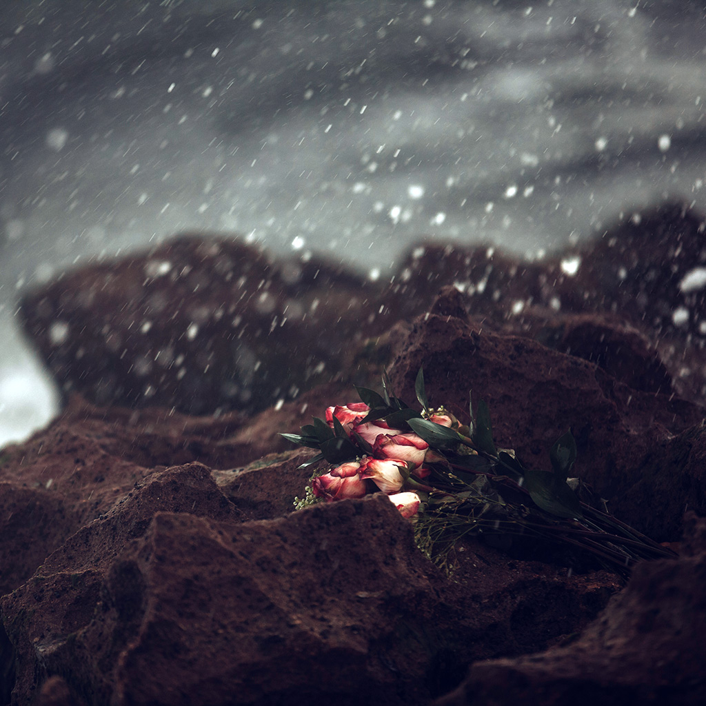 wallpaper-oa37-sad-flower-cold-love-nature-rose-wallpaper