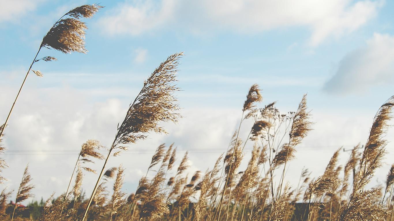 desktop-wallpaper-laptop-mac-macbook-air-oa40-fall-field-nature-cloud-autumn-wallpaper