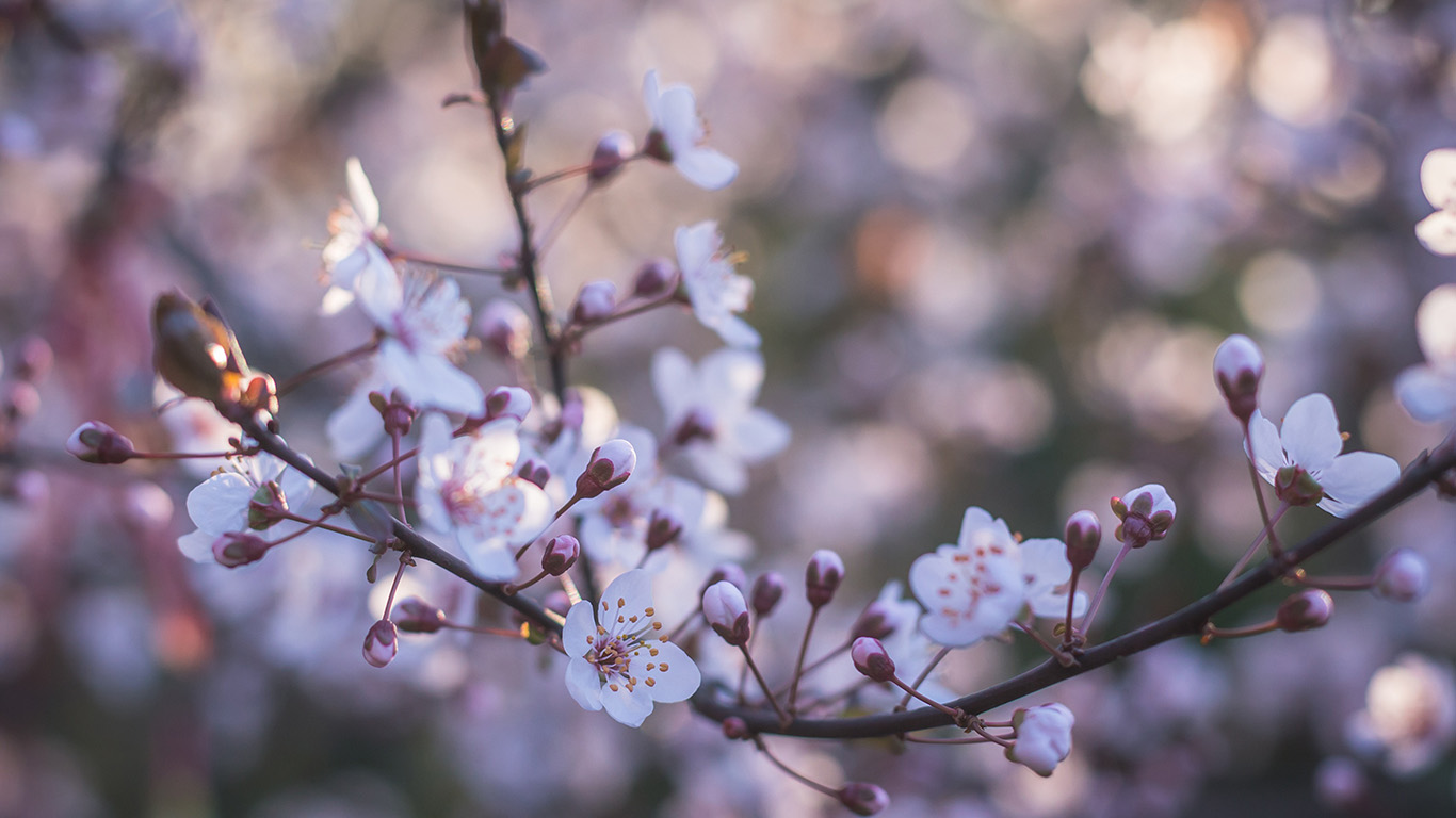 desktop-wallpaper-laptop-mac-macbook-air-oa86-flower-bokeh-spring-nature-wallpaper
