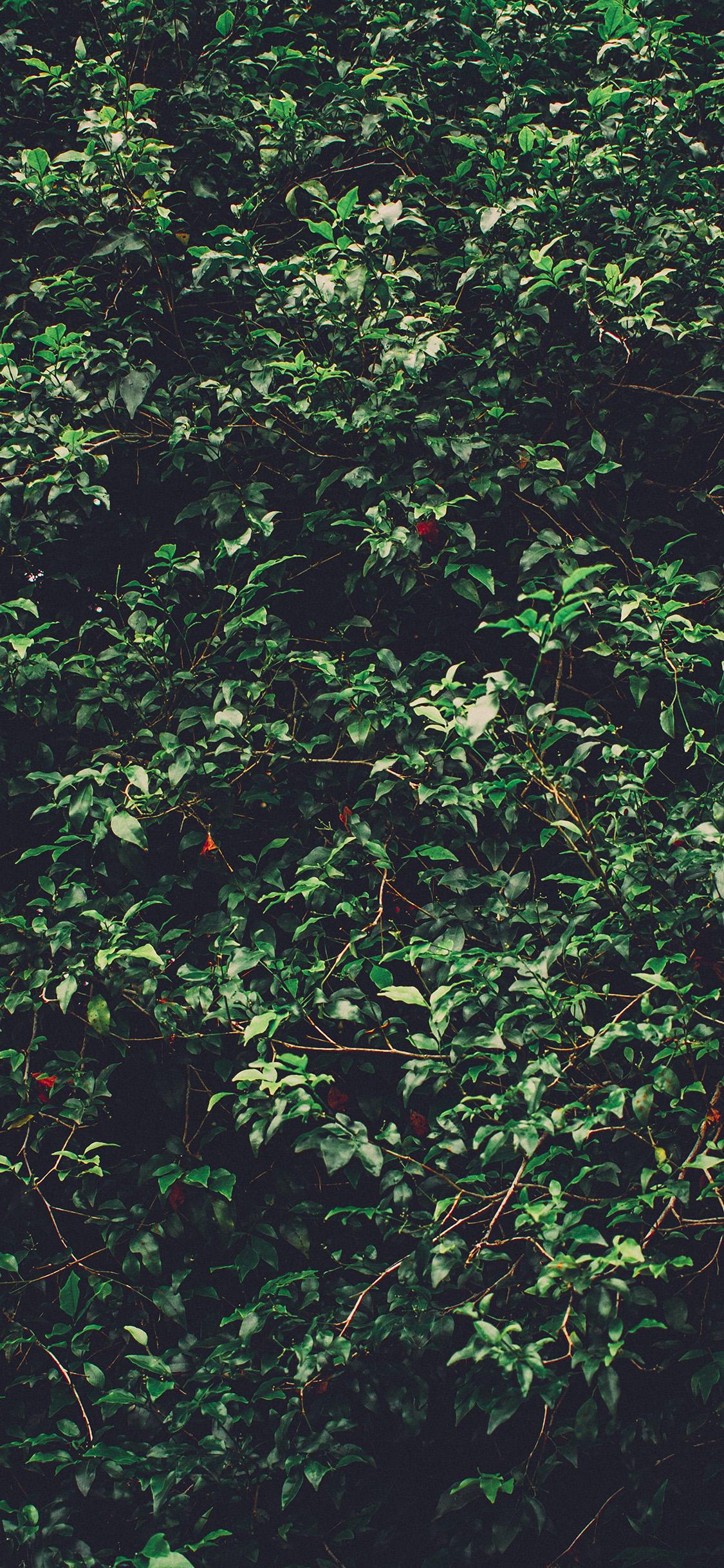 iPhonexpapers.com-Apple-iPhone-wallpaper-oa95-tree-leaf-green-summer-nature