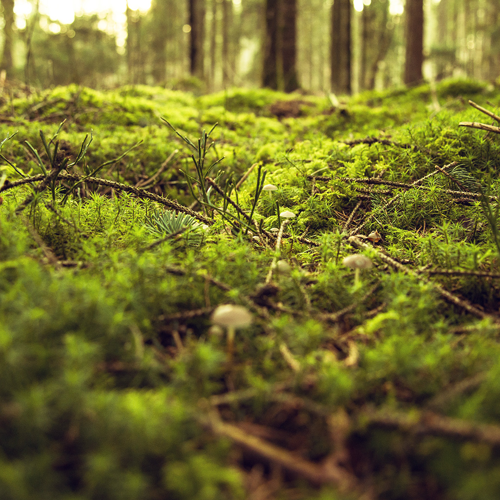 wallpaper-ob02-wood-forest-leaf-bokeh-nature-wallpaper