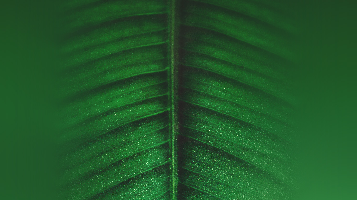 wallpaper-desktop-laptop-mac-macbook-ob48-leaf-green-tree-nature