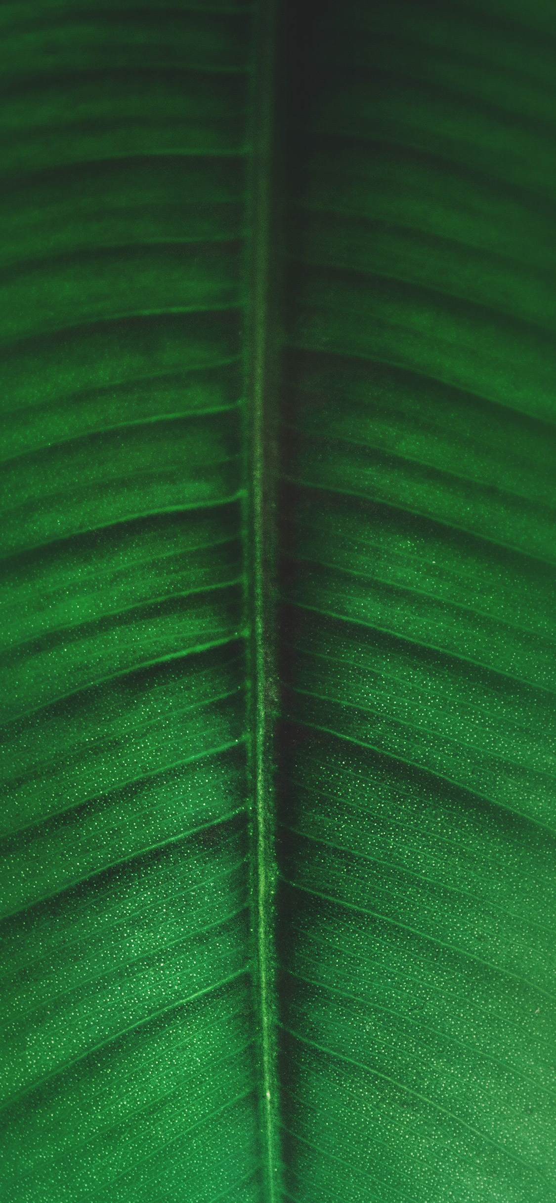 iPhonexpapers.com-Apple-iPhone-wallpaper-ob48-leaf-green-tree-nature