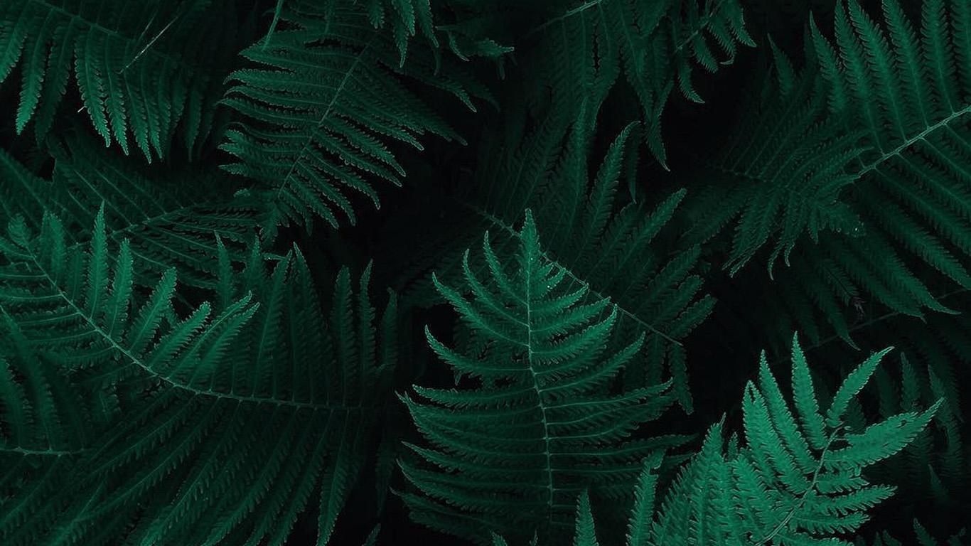 desktop-wallpaper-laptop-mac-macbook-air-ob55-green-leaf-dark-nature-wallpaper